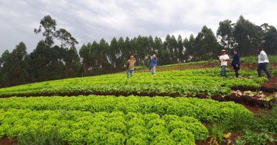 Com apoio da Suzano, agricultores familiares do Vale do Paraíba (SP) se reinventaram e transformaram a vida no campo