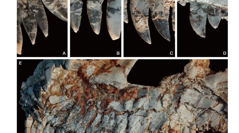 Fóssil achado em MG pode revelar novidades sobre dinossauros